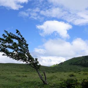 八ヶ岳 レイニーシーズンだけど高原ハイキング in 姫木平     Himekidaira in Yatsugatake-Chūshin Kōgen Quasi-National Park