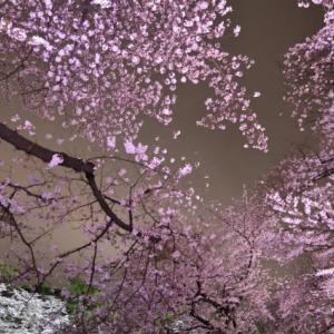 東京の桜満開 2016(千鳥ヶ淵・目黒川)