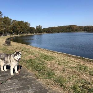 秋の良き日に水元公園