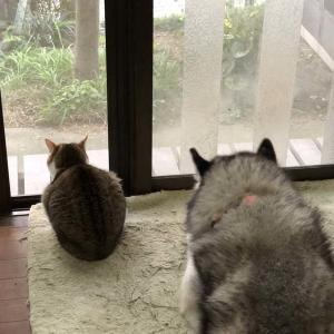 にわか雨に注意