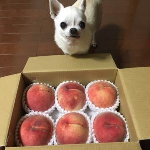 また桃です