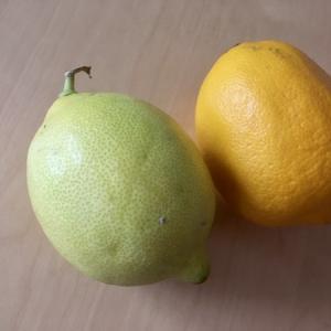 ニースのレモン