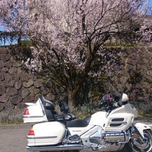 春だ~~~