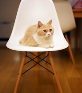 新しい椅子がやってきた。