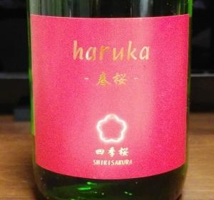 四季桜  haruka