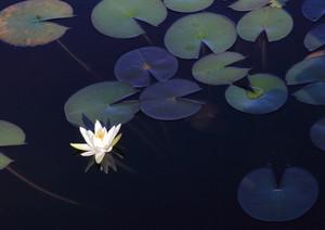 (||゜Д゜) toto 沼にはまる.........