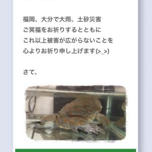カエルと月桃日記 2020.7.8. 大雨特別警報