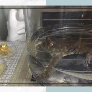 カエルと月桃日記 2020.7.11. 晴天、真夏の日曜日