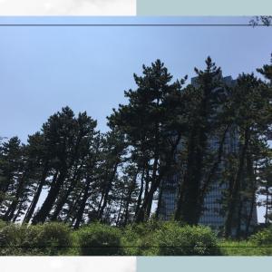 カエルと月桃日記 2020.8.16. 夏はサイコー