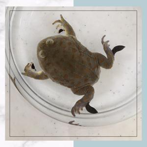 カエルと月桃日記 2020.9.12. 雨の土曜日