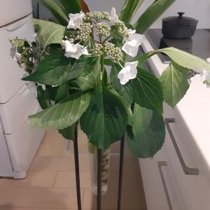 キッチンでお花仕事✨