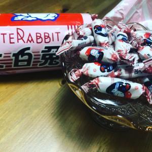 小白兔キャンティと春の新しい試み