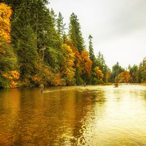 Sooke River Oct.17