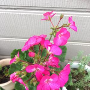 我家のお花たちとご縁な方々。