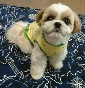 ハンドメイド犬服