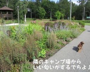 くるみなの庭