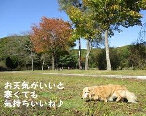 金太郎の池を散歩