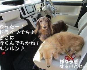狂犬病予防注射に動物病院へ