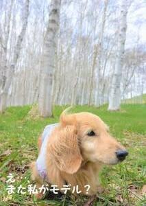 白樺並木で