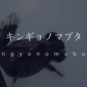 金魚のweb品評会 キンギョノマブタ