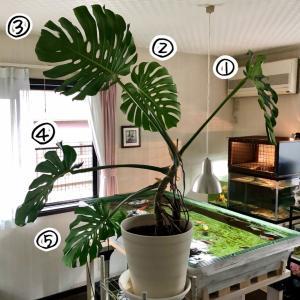 梅雨の時期の虫と植物