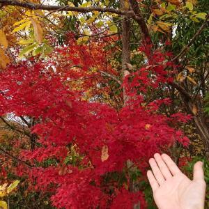 【50代主婦のつぶやき】癒し&素敵な紅葉★最近の出来事♪