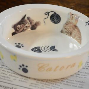 5月31日(金)猫のフードボウル作りを開催します!