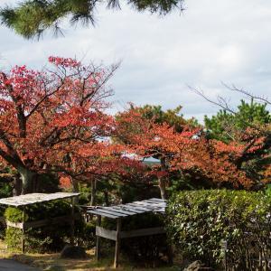 日和山公園の紅葉[山形県酒田市・2019/11/10]