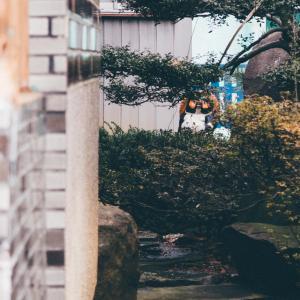 たぬきが覗く[山形県酒田市・2020/1/16]