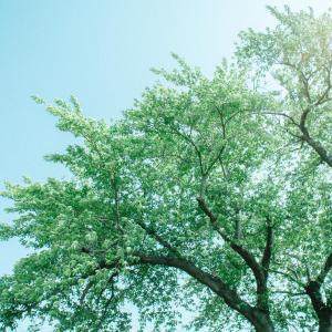 ツツジの花が開く頃[山形県酒田市市条・2020/5/24]