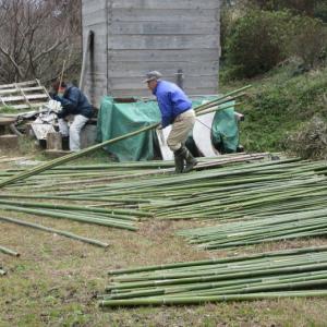 竹イベントの準備