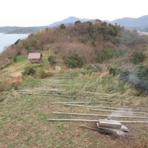 竹伐採、今年も始まる!