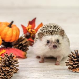 10月の季節美容のおはなし