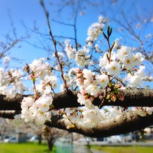 春を感じる