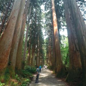 【2019夏 避暑地で過ごす】戸隠神社 杉並木の参道~奥社へ