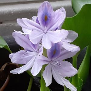 初めての花が咲きました\(^^)/