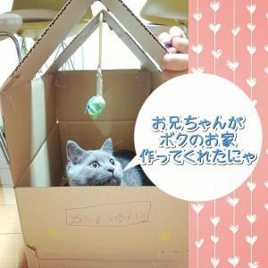 愛猫の別荘