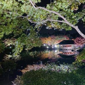 こどもと夜散歩【昭和記念公園】