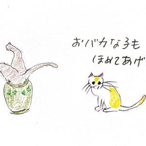 猫ちゃん、十匹十色
