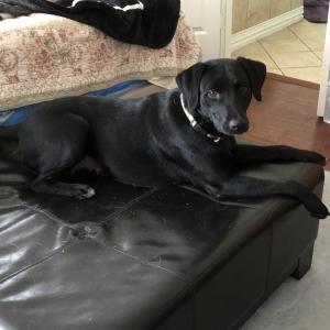 生後八か月ぐらいの子犬が我が家にやってきました。