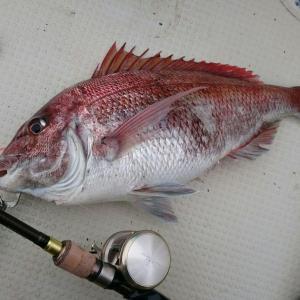 最近の釣り