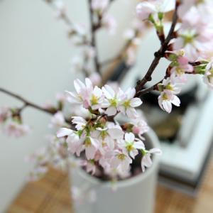 【KOZフラワー】vol, 50 梅や桜が飾りたい!