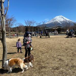 富士山の日、お芋食べたかったね!(^○^)☆