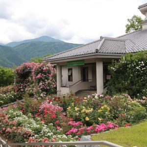 富士川クラフトパーク・薔薇が綺麗でした!☆