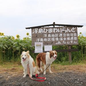 向日葵畑見てから川遊び〜(^∇^)☆