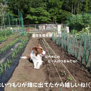 菜園管理しながらワン達と遊んでます!(^O^)☆