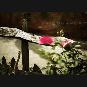 秋の庭 9