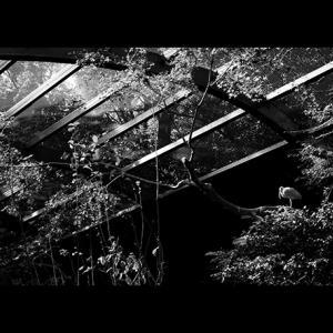 秋の光・2