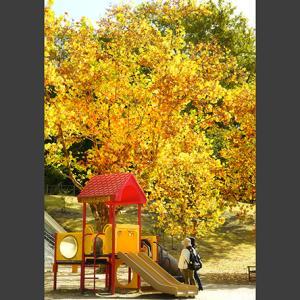 秋の光・5