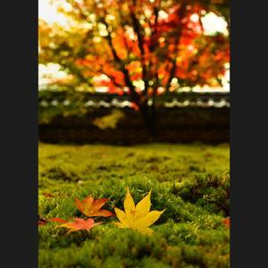 秋の光・7